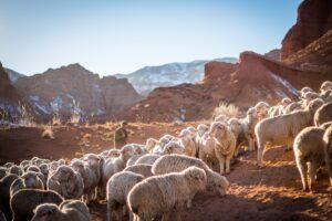 Why is Jesus called the Good Shepherd?