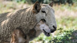 Wolves among the sheep/ false prophets explained